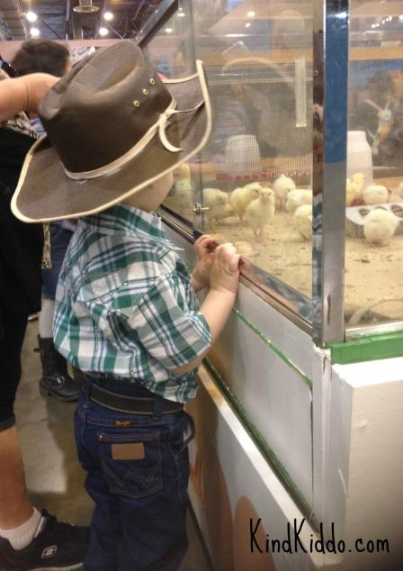 KK Rowdy rodeo chicks